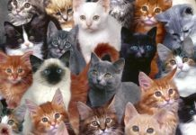 top gifts for cat lovers