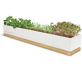 microgreensbox