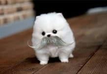 best mustache gifts